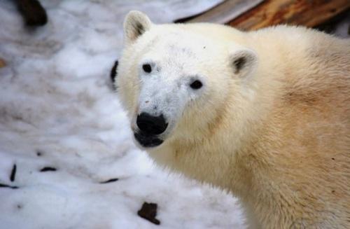 oso-canada